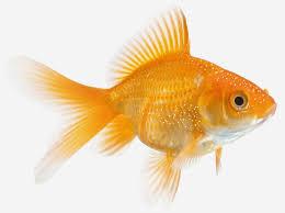 Mardel Fish Disease Chart Seachem Paraguard