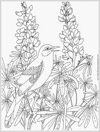 Coloring Pages Robin Bird Coloring Pages For Adult Realistic