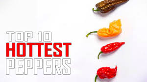 Top 10 Worlds Hottest Peppers In The World Is Ghost Pepper 1