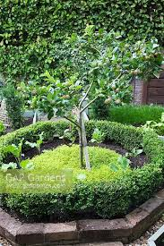 central brick edged buxus box circle with small apple tree underplanted with golden thyme and