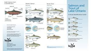 Species Identification Lake Ontario Atlantic Salmon