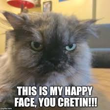 grumpy cat good smile. Contemporary Good Neighboru0027s Cat Has A Good Smile And Grumpy Smile M