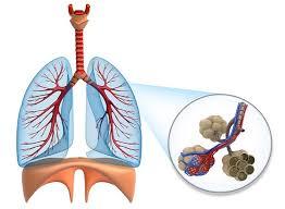 Wie funktioniert die atmung des menschen