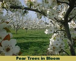 106 Best Wickmanu0027s Plant Picks Images On Pinterest  Flower Fruit Trees In Kansas