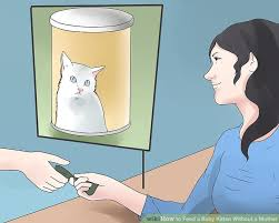 image titled feed a baby kitten without a mother step 1