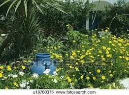 blue moroccan pot in summer garden