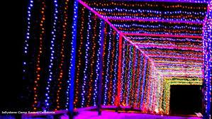 Yogi Bear Christmas Lights