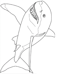Small Picture Free Printable Shark Coloring Pages For Kids Shark Printable