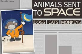 space exploration benefits animals sent to space