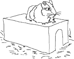 Small Picture A Hamster on Its Limps in Guinea Pig Coloring Page Color Luna