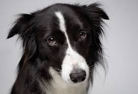 Image result for dog expressions