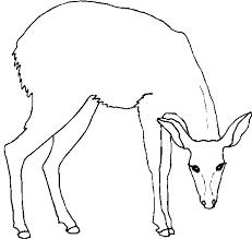 Disegni Animali Della Foresta 1 Disegni Per Bambini Da Stampare E
