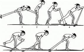 Лыжные шаги виды Техника классических лыжных ходов реферат Какие бывают виды ходьбы на лыжах