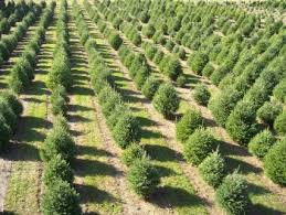 Cutyourown Christmas Tree Farms In Maine  MainetodayChristmas Tree Cutting Nj