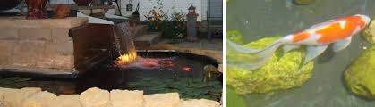 ponds indoor and outdoor water gardens