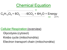 3 chemical equation ox c 6 h 12 o 6 6o 2 6co 2 6h 2 o energy red atp cellular respiration overview glycolysis cytosol krebs cycle mitochondria