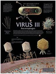 Virus Wall Charts