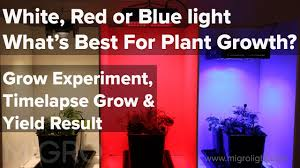 Best Led Light For Plant Growth White Red Or Blue Light For Growing The Best Colour For Plant Growth Time Lapse Grow Yield