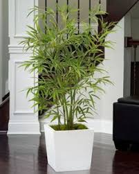 artificial plants for office decor. office decorating made easy with silk plants artificial for decor c