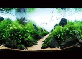 Modern Aquarium Design With Aquascape Style For New Interior ...