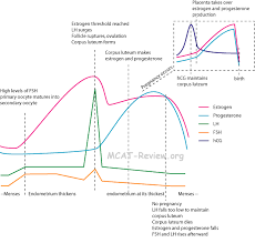 Reproductive System And Development Mcat Review
