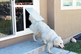 cutting edge design this high quality pet door