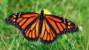 butterfly essay children  butterfly essay children