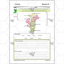 Life Cycles: Flowering Plant Reproduction | PlanBee