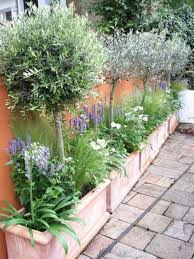 small plants for narrow garden beds inspiring courtyard design your