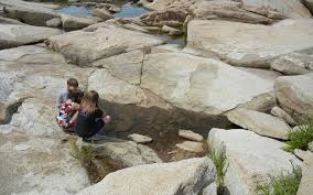 How To Explore Tidal Pools With Kids Appalachian Mountain Club
