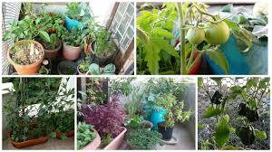Kitchen Gardening For Beginners Urban Leaves India Abc Of Kitchen Gardening Workshop Sunday 11