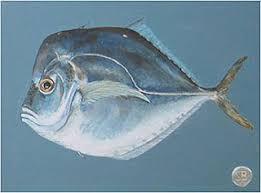 Image result for moon fish images