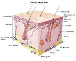 skin cancer treatment pdq pdq