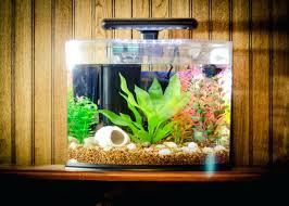 fish tank decor ideas small decoration decorations