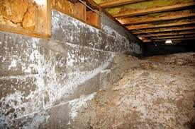 mold mitigation cost. Simple Mitigation Crawl Space Mold Problems In Mitigation Cost