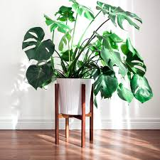 Mid Century Plant Stand Hookandstem Mid Century Modern Plant Stand At Km