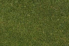 Grass Texture Seamless Grass Texture Seamless L Nongzico