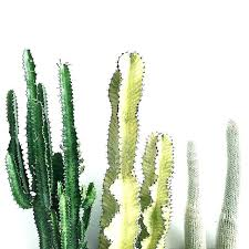 indoor cactus plants s types large house uk