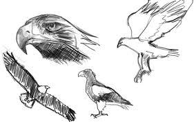100 鳥 イラスト かっこいい ベスト キャラクター 壁紙イラスト