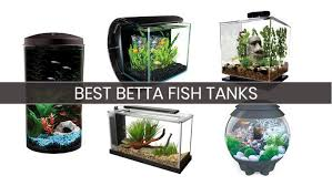 betta fish tanks. Simple Tanks Betta Fish Tanks And Betta Fish Tanks W