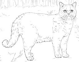 Color the pictures online or print them to color them with your paints or crayons. Cat Coloring Pages For Adults Best Coloring Pages For Kids