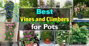 13 Container Gardening Ideas  Potted Plant Ideas We LoveWall Climbing Plants In Pots