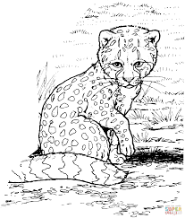 The cheetah coloring pages present a beautiful collection of. Baby Cheetah For Coloring Pages Coloring Home