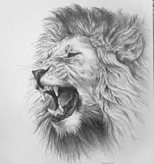 lion drawing. Beautiful Drawing Pin By Nick Lepek On Tattoo Ideas  Pinterest Tattoos Designs And  Drawings And Lion Drawing A