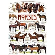 Horse Shipping Quotes Magnificent Shop Horse Quotes 4848 Piece Puzzle Free Shipping On Orders Over
