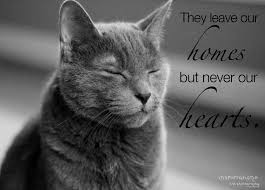 Loss Of A Cat Quotes New Loss Of A Cat Quotes Cat And Dog Lovers