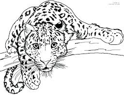 Jaguar Coloring Pages Online P