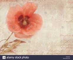 Postcard Collage Template Grungy Retro Background With Poppy Flowers A Vintage Styled