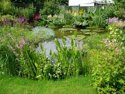 Small Picture garden pond design and marginal planting 5 Senses Garden