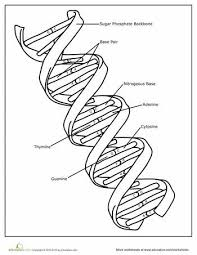 1a37568b4e1f309ab32797540d48321f science biology teaching biology 643 best images about science on pinterest dna, earth science on grade 1 science worksheets
